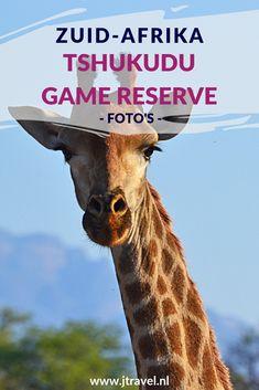 In de buurt van Hoedspruit vind je het private game reserve Tshukudu Game Reserve. Hier heb ik onder begeleiding van een ranger in een open 4x4 een schitterende gamedrive gemaakt. Kijk je mee en beleef de momenten mee dat je wild spot? #tshukudugamereserve #wildlife #gamedrive #zuidafrika #jtravel #jtravelblog #fotos