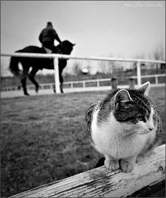 Kone a kočky