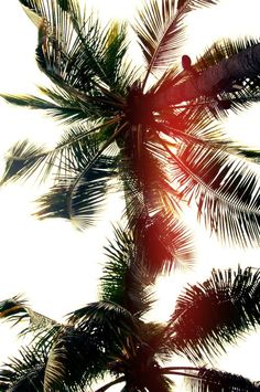 .palm trees.