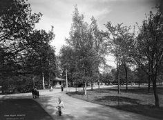 Kaisaniemi.  Brander Signe HKM 1912 Helsingin kaupunginmuseo.