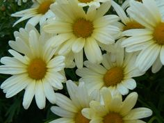 Backyard flowers. ~R. Reynolds
