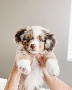 Baby Animals Super Cute, Super Cute Puppies, Cute Little Animals, Cute Dogs And Puppies, Cute Funny Animals, Doggies, Funniest Animals, Funny Puppies, Puppies Puppies