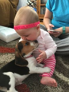 Beagle puppies and babies...What could be cuter? #Beagle