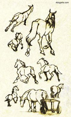 Horses running Away Sketches
