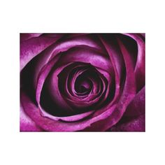 >>>This Deals          Radiant Orchid Rose Canvas Prints           Radiant Orchid Rose Canvas Prints online after you search a lot for where to buyShopping          Radiant Orchid Rose Canvas Prints Review on the This website by click the button below...Cleck link More >>> http://www.zazzle.com/radiant_orchid_rose_canvas_prints-192007455050385327?rf=238627982471231924&zbar=1&tc=terrest