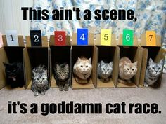this aint a scene its an arms race | Tumblr<<< I'm sorry but the cat in box 1 looks like it's 200% done xD