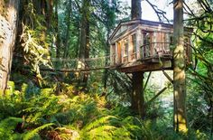 Get back to nature, or rather, right on top of it in one of these magnificent tree houses. It's like the treehouse you always wanted as a kid, but got a blanket fort instead