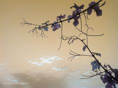 Cielo de verano en #Contiempo
