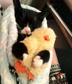 How freakin adorable:  Kitty Never Sleeps without Her Little Quack