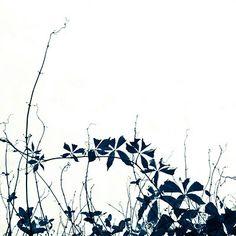 Black and White art print. Botanical art print. Minimalist Art. Unisex. Gift under 25. Gift for her. Gift for him. 8x8 or 8x10