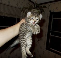 peg plus cat cast