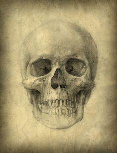 skull study pencil o