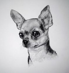 Discover recipes, home ideas, style inspiration and other ideas to try. Chihuahua Meme, Creel Chihuahua, Chihuahua Drawing, Baby Chihuahua, Pencil Drawings Tumblr, Cute Animal Drawings, Art Drawings, Small Dog Tattoos, Friends Sketch