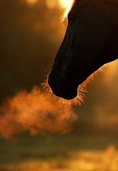 Beautiful horse breathing in the Autumn Air....