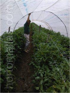 Trellis, The Expanse, Farmer, Plants, Farmers, Plant, Planets