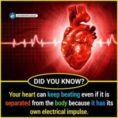 Amazing Facts that you Should Know True Interesting Facts, Some Amazing Facts, Interesting Facts About World, Intresting Facts, Unbelievable Facts, Wierd Facts, Wow Facts, Real Facts, General Knowledge Facts