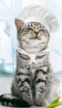 Pro Chef - your daily dose of funny cats - cute kittens - pet memes - pets in clothes - kitty breeds - sweet animal pictures - perfect photos for cat moms I Love Cats, Crazy Cats, Cool Cats, Baby Animals, Funny Animals, Cute Animals, Funniest Animals, Animal Babies, Animal Memes