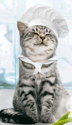 Chef cat. :-)