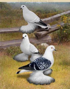 Pigeon art: Ice Pigeons on the fence by Gary Romig