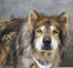 Zhore: After being in foster care for 9 months, this beauty needs a forever home