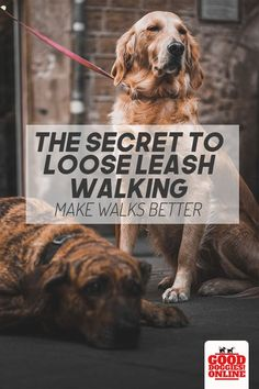 If you need to stop your dog from pulling on the leash, check out these dog training tips on the secret to loose leash walking with your dog or puppy. #dogs #dogtraining #leashpulling