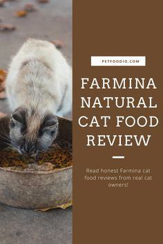 Farmina Natural Cat Food: Not as Natural as You Think! - PetFoodio.com Healthy Cat Food, Animals And Pets, Cat Lovers, Thinking Of You, Cats, Natural, Pets, Thinking About You, Gatos