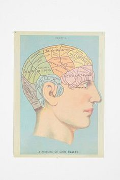 Phrenology Head Poster $24.00