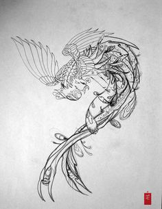 Phoenix+Bird+Drawings | tattoo design meanings
