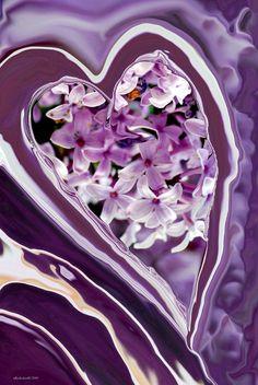 Coeur lilas