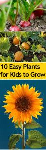 Top+10+Easy+Plants+for+Kids+to+Grow // strawberries, sunflowers, pumpkins!