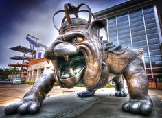 #JMU Duke Dog Like,Repin,Share, Thanks!