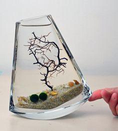 Marimo Terrarium // Japanese Moss Ball Aquarium // Flat Vase // Sea Fan // Shells // Green Gift // Home Decor on Etsy, $42.00