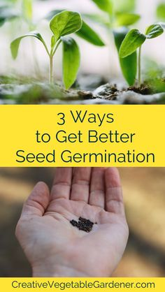 3 Ways to Get Better Seed Germination It& frustrating when you have trouble getting seeds to germinate. Here are a few tricks for how to germinate seeds that will help increase your success. Fruit Garden, Garden Seeds, Edible Garden, Planting Seeds, Herbs Garden, Garden Tools, Organic Vegetables, Growing Vegetables, Growing Plants