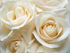 ¡Tu personalidad es como la delicada rosa blanca! Eres la más pura de todas. Una inocente y pequeña flor, a pesar del mundo que te rodea. La rosa blanca simboliza un nuevo comienzo, cada paso que das en la vida es como una huella en la arena, eres empática y humilde y la gente te encuentra muy encantadora. Esto es lo que atrae a la gente hacia ti, que básicamente te llevas bien con todo el mundo. ¿Suena como tú?