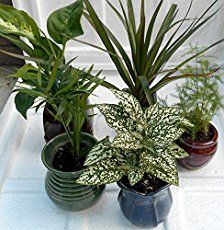 10 Air Purifying Plants To Grow Inside Your Home – Dan330