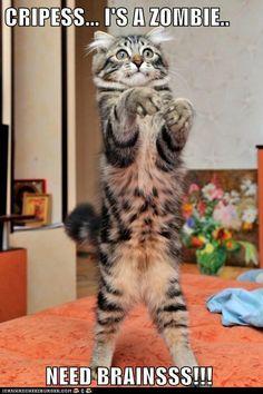 Funny cat picture - http://jokideo.com/
