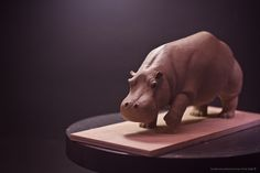 Hippo | © Victor Gully