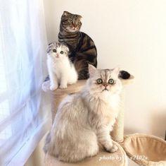 L'eye-liner parfait est clairement une tradition familiale féline.   16 photos de chats qui sont plus doués que vous pour faire un trait d'eye-liner