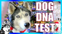 DOG DNA TEST RESULTS | Day 8 of 12 Days of Giveaways 2016  Oakley and S...