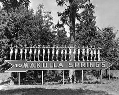 An old attraction, now a state park- really interesting. Wakulla Springs, near Tallahassee, Florida Old Florida, Florida Girl, Visit Florida, Vintage Florida, Florida Travel, Tallahassee Florida, Spring Date, Spring Sign, Roadside Attractions