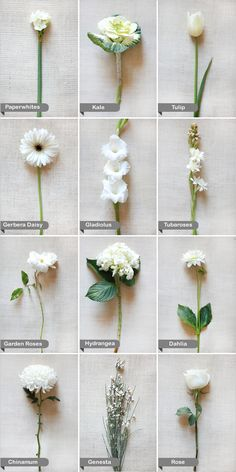 White flower guide pinterest white wedding flowers flower and we have your ultimate resource for wedding flowers wedding flower guide mightylinksfo