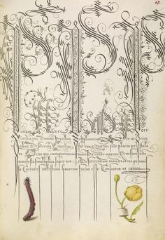 Joris Hoefnagel (illuminator) [Flemish / Hungarian, 1542 - 1600], and Georg Bocskay (scribe) [Hungarian, died 1575], Caterpillar and Globeflower, Flemish and Hungarian, 1561 - 1562; illumination added 1591 - 1596, Watercolors, gold and silver paint, and ink on parchment, Leaf: 16.6 x 12.4 cm
