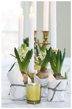 Spring vignette with exposed bulbs and tapers. Love how the green pops against the white and greys.