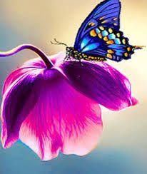 14 ideias de Borboletas e flores | borboletas, imagens borboletas, flores
