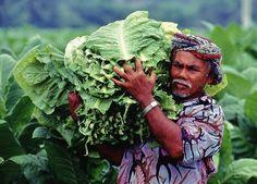 Da un seme ad una cultura: il tabacco by Paologr63 @ http://adoroletuefoto.it