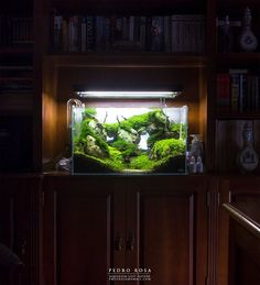 Aquascpe by Pedro Rosa. Lost Nature Aquarium, almost 7 months, 60l. Pin by Aqua Poolkoh
