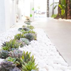 Succulents are the perfect addition to outdoor walkways!