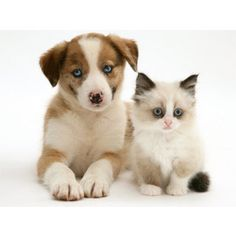 477 Best Puppies Kittens Images On Pinterest