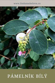 Plant Leaves, Garden, Plants, Honey, Garten, Lawn And Garden, Gardens, Plant, Gardening