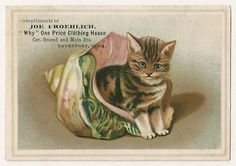 Cats in Art, Illustration and photography: trade card, Illustration by Helena Maguire.